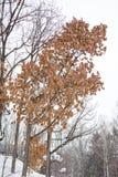 山有第一冬天雪的山毛榉森林 库存图片