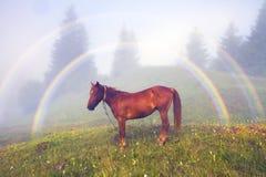 山有雾的彩虹 库存图片