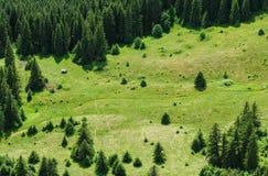 山森林和草甸夏天风景 免版税库存照片