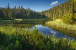 山森林喀尔巴阡山脉的湖 免版税图库摄影