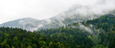 山森林在cloudscape比利牛斯法国 免版税库存照片