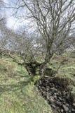 山森林地-高小山的植被 图库摄影