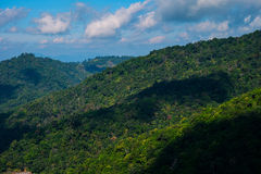 山森林狡猾的lanscape 免版税图库摄影