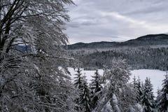 山森林的冬天视图 免版税库存图片