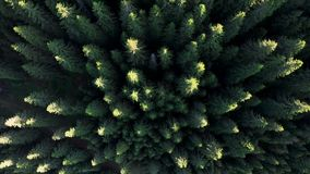 山森林的鸟瞰图,日出的 影视素材