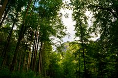 山森林背景的自然图片 免版税图库摄影