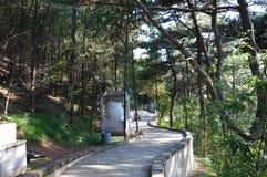 山森林道路 库存图片