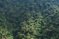 山森林,密林 免版税库存图片