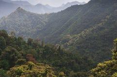 山森林,密林 库存照片