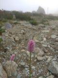 山植物 库存图片