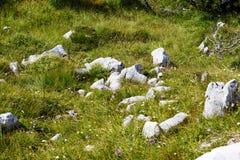 山植被石头、砂岩和小花在草 免版税库存图片