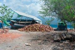 山椰子 库存图片