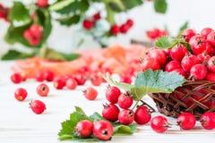 山楂树莓果和叶子在一个柳条筐的 图库摄影