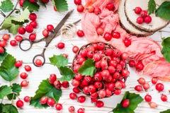 山楂树莓果和叶子在一个柳条筐的 免版税库存图片