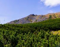 山横向在夏天 免版税库存照片