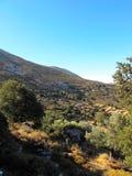 山橄榄树小树林在希腊海岛 免版税库存照片