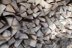 山毛举材背景在冬天 免版税库存图片