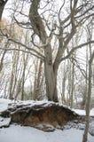 山毛榉树在阿吨国家公园 图库摄影
