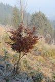 山毛榉树在12月太阳早晨 免版税图库摄影