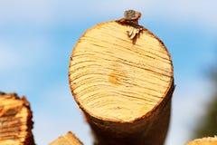 山毛榉树干切成了两半 图库摄影