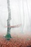 山毛榉森林在与薄雾的秋天 库存图片