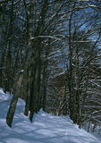 山毛榉森林结构冬天 库存图片