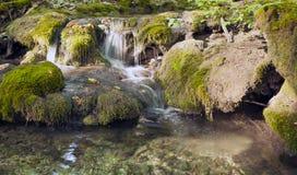 山毛榉森林,深绿色13 库存照片