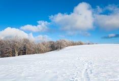 山毛榉第一个森林山雪冬天 免版税库存图片