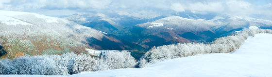 山毛榉第一个森林山雪冬天 库存照片