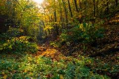 山沟在秋天森林里 库存图片