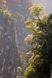山沟结构树 库存照片