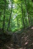 山沟路通过绿色森林 库存照片