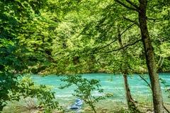 山河和森林的银行 库存图片