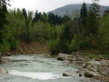 山河在喀尔巴汗森林里 库存图片