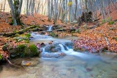 山河在秋天森林里 库存图片