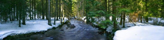 山河的全景在森林中间的 免版税库存照片