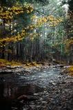 山河透明的水在秋天森林中的在雾的喀尔巴阡山脉的 库存图片