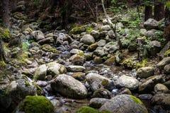 山河,在森林里爬行深深 免版税库存照片