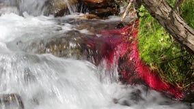 山河细节用红色植物和移动的水 03 股票录像