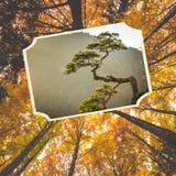 山波兰的Pieniny美丽的景色拼贴画  免版税库存照片