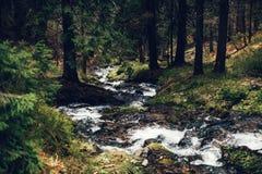 山流在春天 库存图片