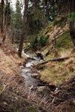 山流在春天 库存照片