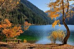 山湖的海岸 免版税库存照片