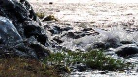山瀑布,小河,河 水在阳光下飞溅在石头 影视素材