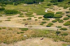 山牧场地 库存照片