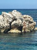 山珊瑚在海洋 库存照片