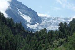 山瑞士夏天绿色花 库存照片