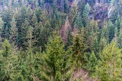山的一个森林在晚冬季节 库存图片