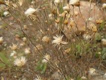 山的一棵枯萎的植物 免版税库存图片