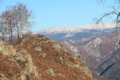 从山的下降骆驼,阿尔泰,俄罗斯 库存照片